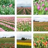 Collage de zone de tulipe Image libre de droits
