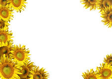 Collage - a decorative framework from sunflowers Royalty Free Stock Images