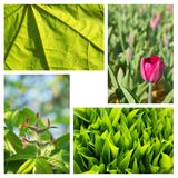A collage of decorative plants Royalty Free Stock Images