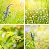 Collage degli ambiti di provenienza della natura della molla Fotografie Stock Libere da Diritti
