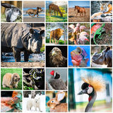Collage degli animali Fotografie Stock