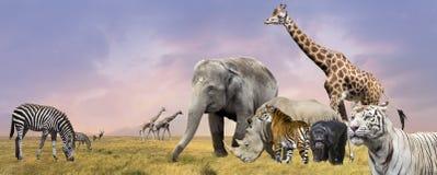 Collage degli animali selvatici della savanna Fotografia Stock Libera da Diritti