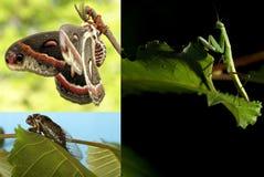 Collage degli insetti Immagine Stock Libera da Diritti