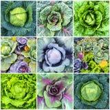 Collage degli ortaggi a foglia, del cavolo e della lattuga Fotografia Stock Libera da Diritti