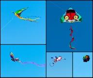 Collage dei cervi volanti Fotografie Stock Libere da Diritti