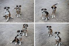 Collage dei cuccioli Fotografia Stock Libera da Diritti