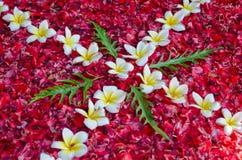 Collage dei fiori Fotografia Stock