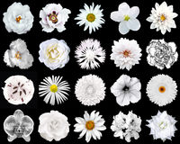 Collage dei fiori bianchi naturali e surreali 20 in 1 fotografie stock libere da diritti