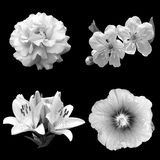 Collage dei fiori in bianco e nero su un fondo nero Fotografie Stock Libere da Diritti