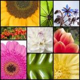 Collage dei fiori nei rettangoli Fotografia Stock Libera da Diritti