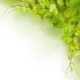 Collage dei fogli della vite Fotografia Stock