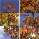 Collage dei fogli di autunno Immagine Stock