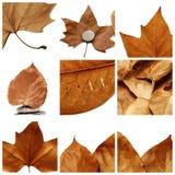 Collage dei fogli di autunno Fotografia Stock Libera da Diritti