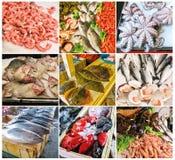 Collage dei frutti di mare e del pesce Immagine Stock