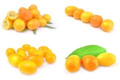 Collage dei kumquat Immagine Stock Libera da Diritti
