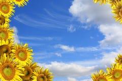 Collage - dekorativer Rahmen von den Sonnenblumen Stockbild