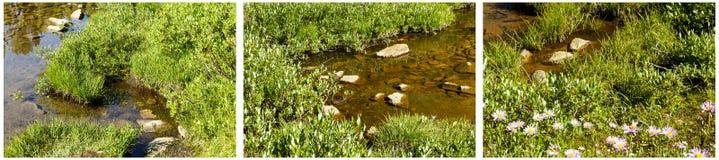 Collage del agua de los sauces de la juncia del pantano de los humedales Imagenes de archivo