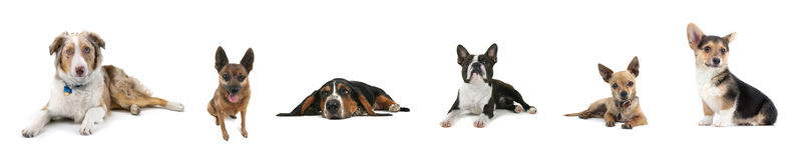 Collage del cane Fotografia Stock Libera da Diritti