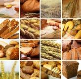 Collage del cereale Fotografie Stock Libere da Diritti