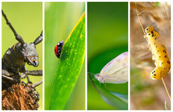 Collage del diferente tipo de insectos Fotografía de archivo