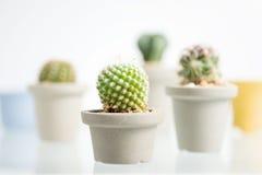 Collage del diverso cactus delante del fondo blanco imagenes de archivo