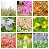 Collage del fiore Fotografie Stock