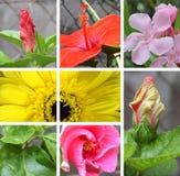 Collage del fiore della natura Fotografia Stock