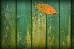 Collage del foglio Fotografia Stock
