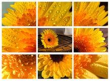 Collage del Gerbera Foto de archivo