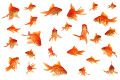 Collage del goldfish del girante laterale Fotografia Stock
