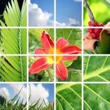 Collage del jardín Fotos de archivo