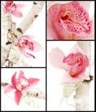 Collage del mazzo dell'orchidea fotografie stock libere da diritti
