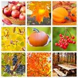 Collage del otoño Imágenes de archivo libres de regalías