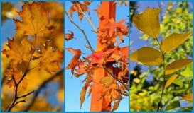 Collage del otoño Fotografía de archivo