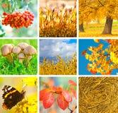 Collage del otoño Imagen de archivo libre de regalías
