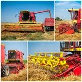 Collage del raccolto del grano Immagine Stock