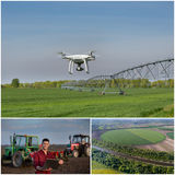 Collage del tiro degli impianti agricoli dal fuco Immagine Stock Libera da Diritti