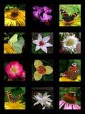Collage del verano Fotografía de archivo libre de regalías