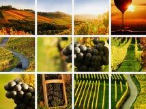 Collage del vino del paese Immagine Stock