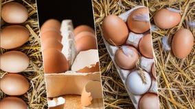 Collage dell'alimento delle uova del pollo Fine in su Fotografie Stock Libere da Diritti