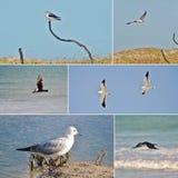 Collage dell'uccello Fotografia Stock