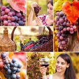 Collage dell'uva e della vite Fotografia Stock Libera da Diritti
