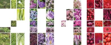 Collage della cartolina per il nuovo anno 2018 dalle varie piante Fotografia Stock Libera da Diritti