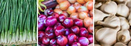 Collage della cipolla della verdura fresca Immagine Stock