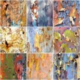 Collage della corteccia australiana colourful di gumtree immagini stock libere da diritti