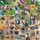 Collage della fauna selvatica Fotografia Stock