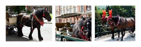 Collage della foto dei cavalli Fotografia Stock