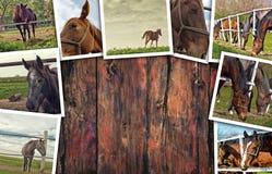 Collage della foto dei cavalli Fotografie Stock Libere da Diritti