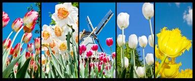 Collage della foto dei tulipani olandesi e dei fiori immagini stock libere da diritti