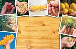 Collage della foto delle mani degli agricoltori su fondo di legno Fotografia Stock